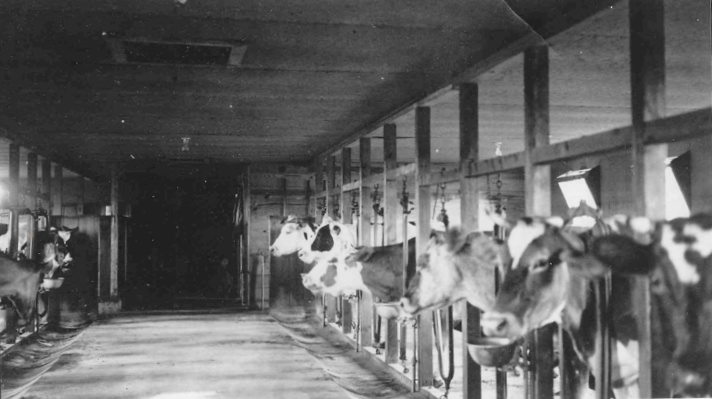 Eldredge's Cow Barn 1963